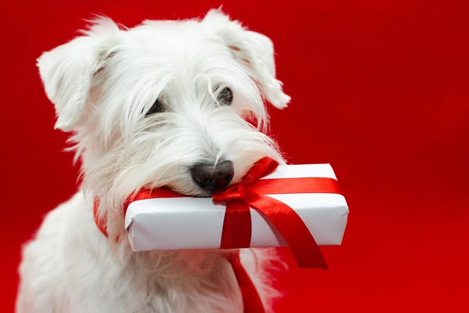 what is a good gift for a dog